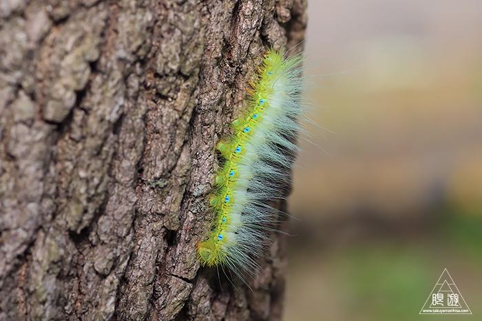 586 八雲立つ風土記の丘 ~ジョーカーという名前の虫とは~_c0211532_01265891.jpg