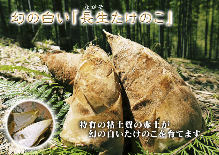 無農薬栽培の熊本産たけのこで作った『干したけのこ』平成30年度商品は残りわずか!早い者勝ちです!_a0254656_18010957.jpg