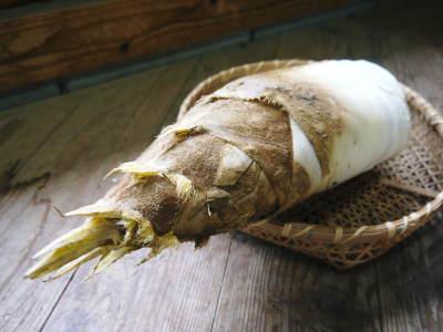 無農薬栽培の熊本産たけのこで作った『干したけのこ』平成30年度商品は残りわずか!早い者勝ちです!_a0254656_18064731.jpg
