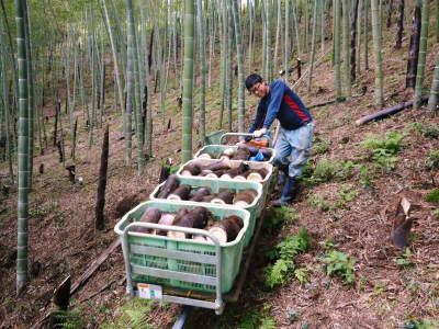 無農薬栽培の熊本産たけのこで作った『干したけのこ』平成30年度商品は残りわずか!早い者勝ちです!_a0254656_18312447.jpg