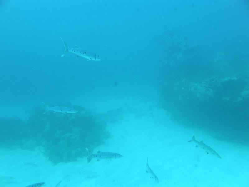 2012.11 カリブ海 The 3rd day The 1st Dive_a0013160_07333377.jpg