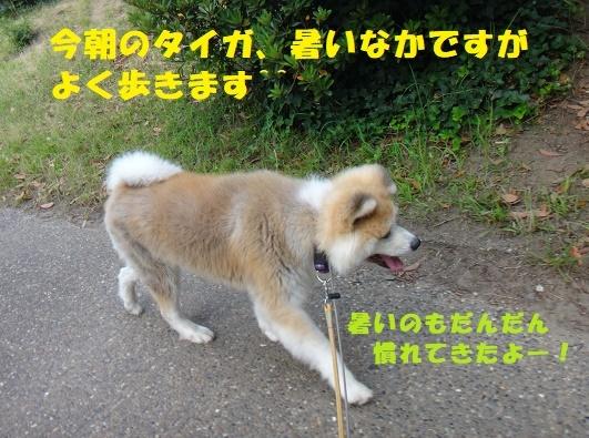 f0121712_14294130.jpg