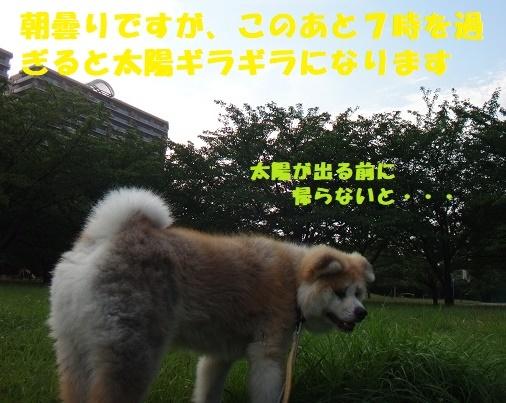 f0121712_14325243.jpg