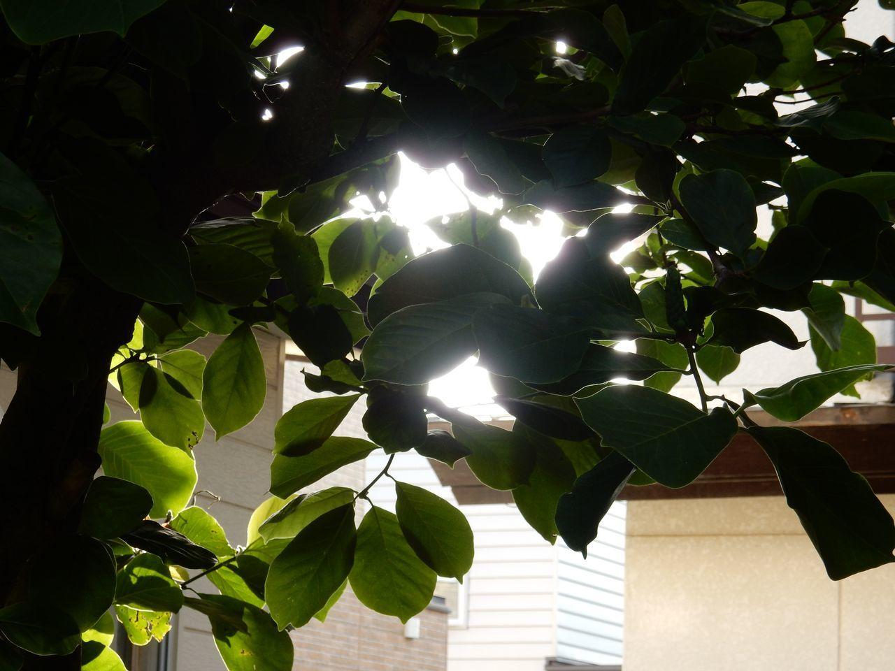 ようやく25℃の夏日になる_c0025115_22102234.jpg