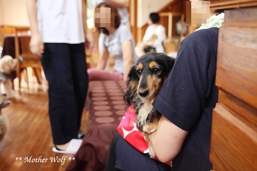 マザーウルフ ゲストハウス・パーティー@伊豆高原 レポート♪_e0191026_15355044.jpg