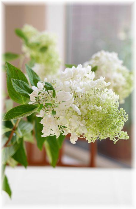 真っ白に咲く夏の花 - Less is more