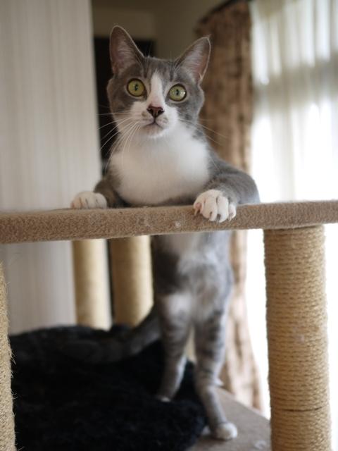 猫のお留守番 天ちゃん麦くん茶くん編。_a0143140_22294679.jpg