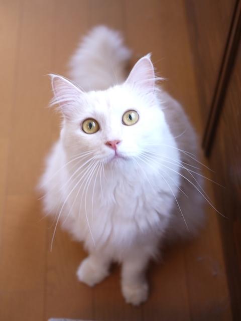 猫のお留守番 天ちゃん麦くん茶くん編。_a0143140_22302302.jpg