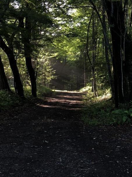 力勝負をしながら森の中で生きる_c0341450_04302848.jpg