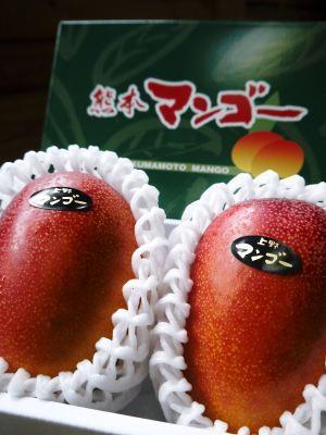 樹上完熟アップルマンゴー やっと完熟しネットに落ち始めました!7月18日(金)~順次出荷していきます!!_a0254656_19074927.jpg