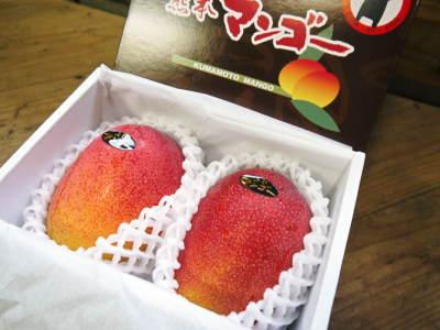 樹上完熟アップルマンゴー やっと完熟しネットに落ち始めました!7月18日(金)~順次出荷していきます!!_a0254656_19122909.jpg