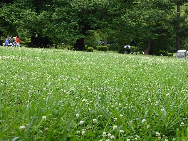 浜離宮はいつ行っても気持ちのいい庭園♪ 花と運河と池と御茶屋と♪_b0287088_16042051.jpg