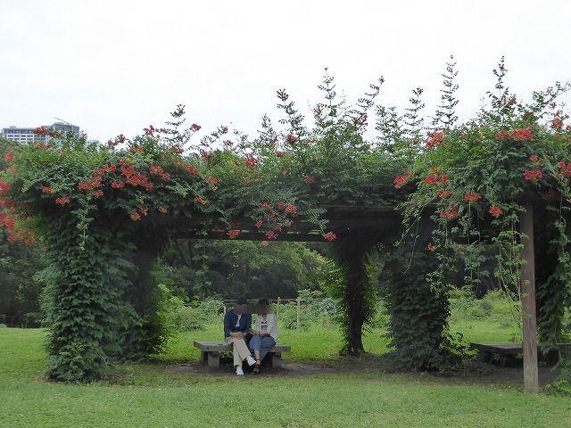 浜離宮はいつ行っても気持ちのいい庭園♪ 花と運河と池と御茶屋と♪_b0287088_16044254.jpg