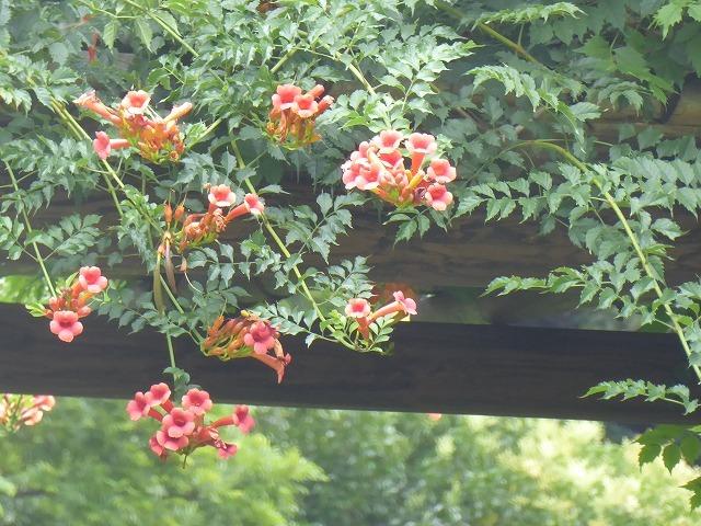 浜離宮はいつ行っても気持ちのいい庭園♪ 花と運河と池と御茶屋と♪_b0287088_16050573.jpg