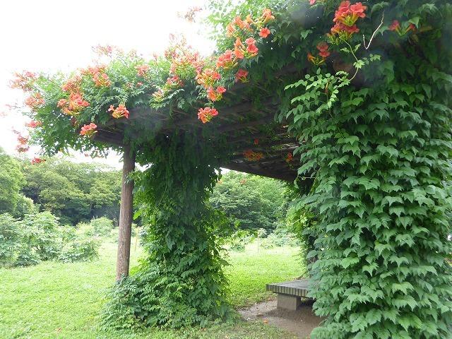 浜離宮はいつ行っても気持ちのいい庭園♪ 花と運河と池と御茶屋と♪_b0287088_16052729.jpg