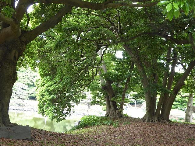 浜離宮はいつ行っても気持ちのいい庭園♪ 花と運河と池と御茶屋と♪_b0287088_16122365.jpg