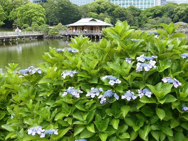 浜離宮はいつ行っても気持ちのいい庭園♪ 花と運河と池と御茶屋と♪_b0287088_16125832.jpg