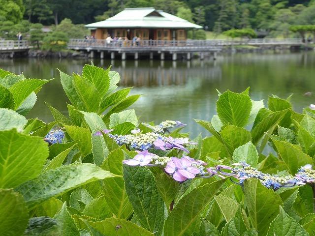 浜離宮はいつ行っても気持ちのいい庭園♪ 花と運河と池と御茶屋と♪_b0287088_16140143.jpg