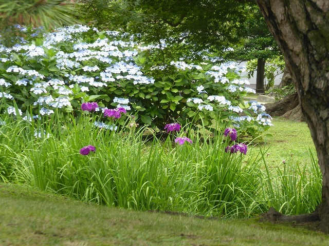 浜離宮はいつ行っても気持ちのいい庭園♪ 花と運河と池と御茶屋と♪_b0287088_16180208.jpg