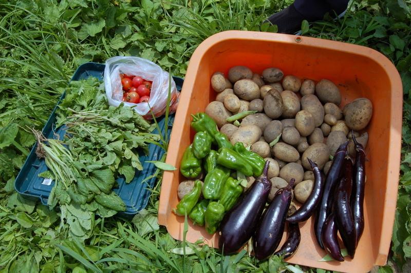 収穫~~~!_c0057390_00110737.jpg