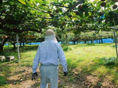 熊本梨 岩永農園 まもなく収穫スタート!今年もこだわりの無袋栽培&樹上完熟にこだわり出荷します!_a0254656_17490712.jpg