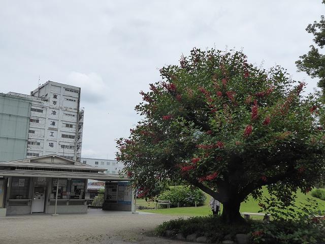 浜離宮はいつ行っても気持ちのいい庭園♪ 花と運河と池と御茶屋と♪_b0287088_16332545.jpg