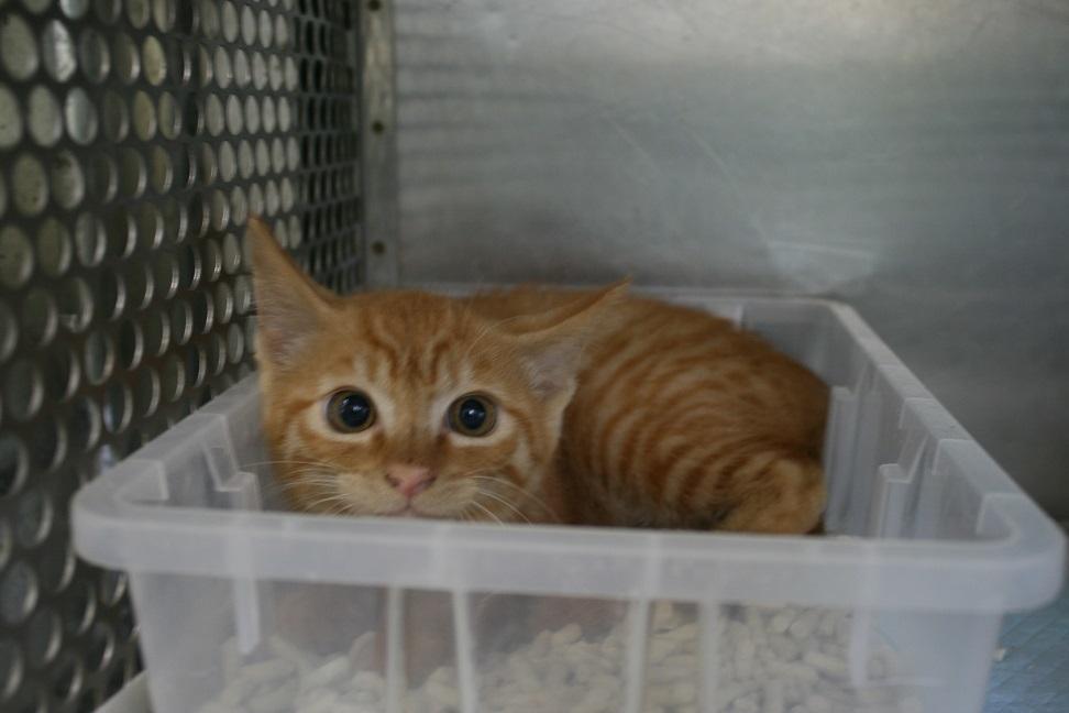 【猫・移動先募集】センター(支所)収容(7/16訪問)_f0242002_09002380.jpg