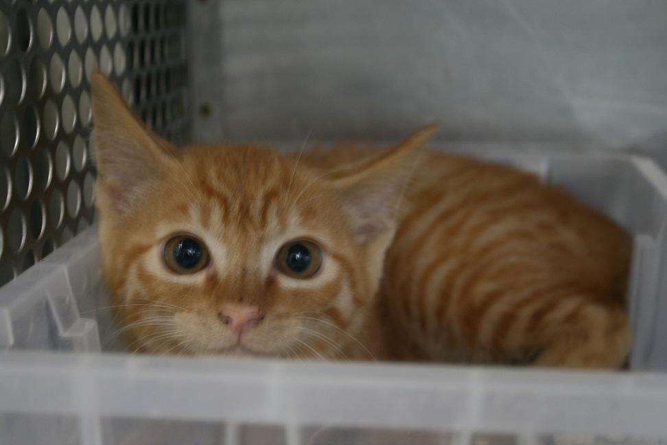 【猫・移動先募集】センター(支所)収容(7/16訪問)_f0242002_09002915.jpg