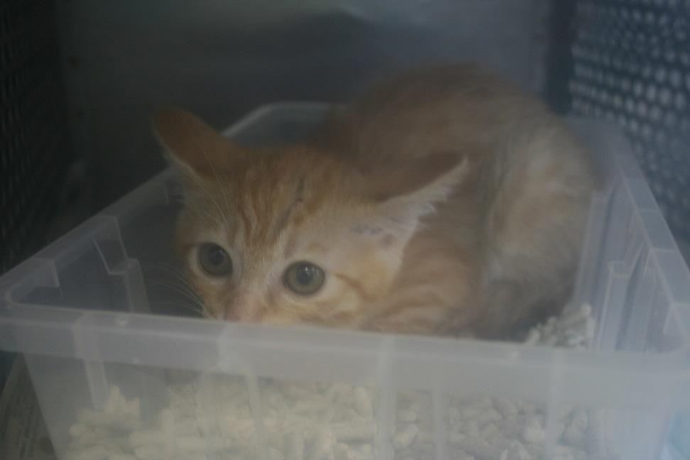 【猫・移動先募集】センター(支所)収容(7/16訪問)_f0242002_09003519.jpg