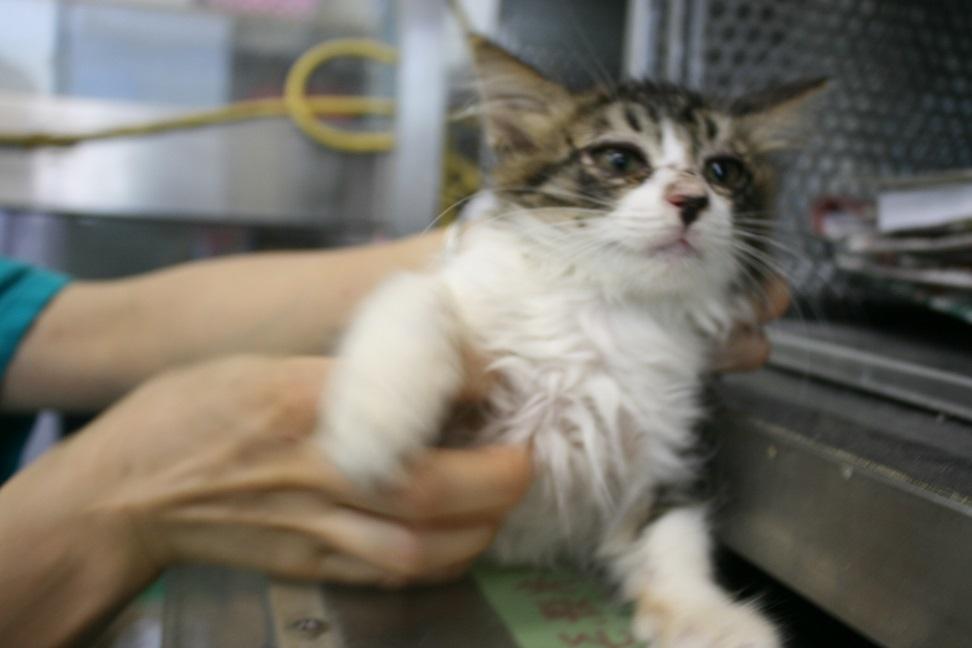 【猫・移動先募集】センター(支所)収容(7/16訪問)_f0242002_09004991.jpg