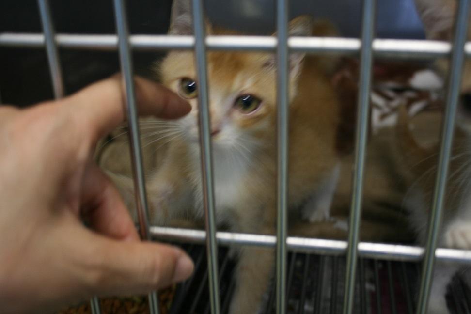 【猫・移動先募集】センター(支所)収容(7/16訪問)_f0242002_09072093.jpg