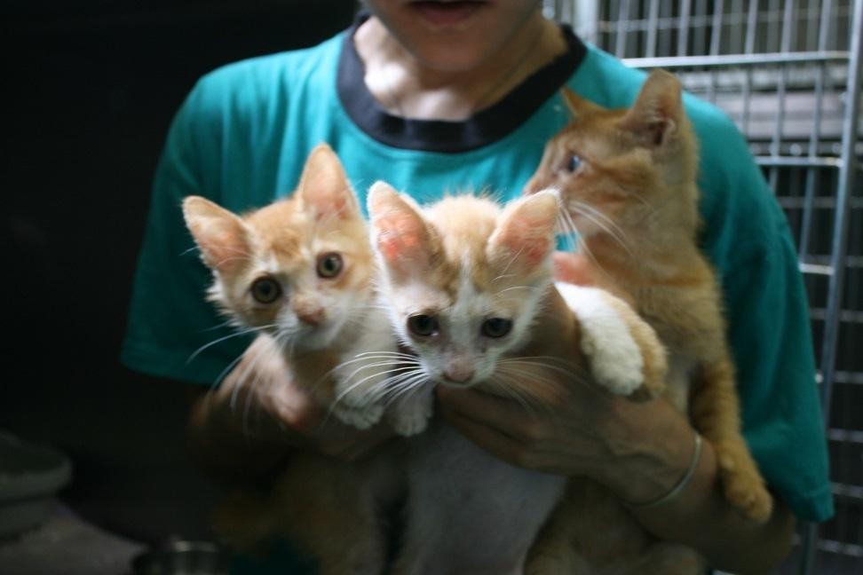 【猫・移動先募集】センター(支所)収容(7/16訪問)_f0242002_09072890.jpg