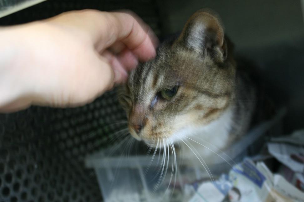 【猫・移動先募集】センター(支所)収容(7/16訪問)_f0242002_09093316.jpg