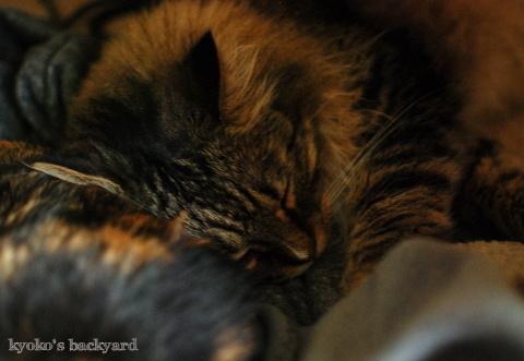 姉猫と弟猫の仲良しショット_b0253205_04012086.jpg