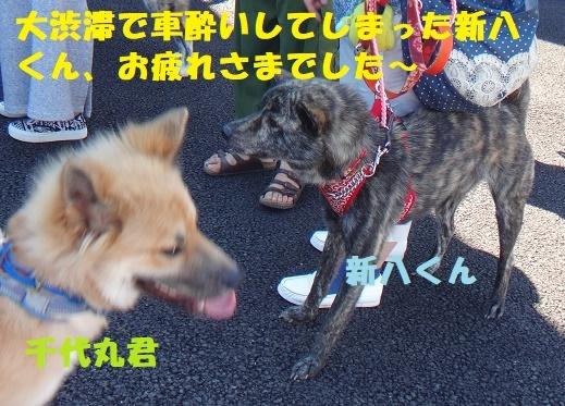f0121712_00441119.jpg