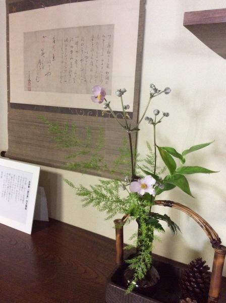 「芭蕉の舘」の草花②_f0289632_16551840.jpg