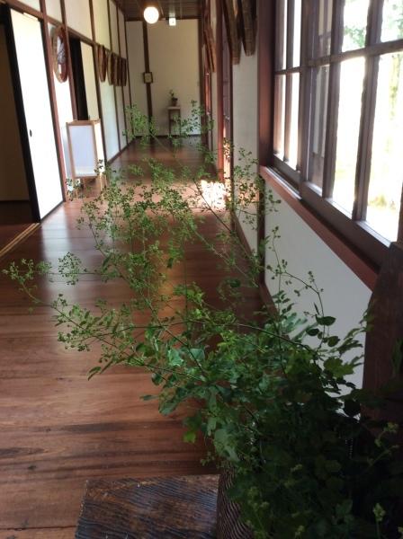 「芭蕉の舘」の草花②_f0289632_16554479.jpg