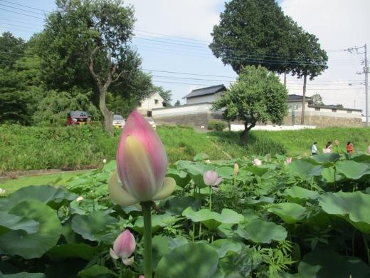 酷暑の中のお出かけ     7月20日(金)_d0127634_15365748.jpg