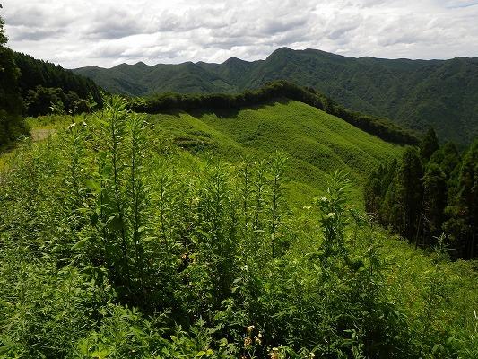 18-7:多良山系「オオキツネノカミソリ」    _f0187402_21263711.jpg