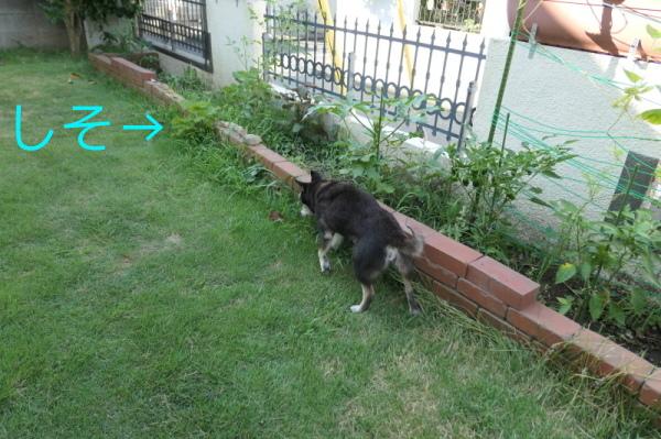 暑いのでお庭遊び_f0369014_12592849.jpg