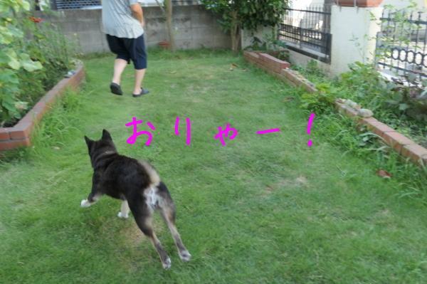 暑いのでお庭遊び_f0369014_13012305.jpg