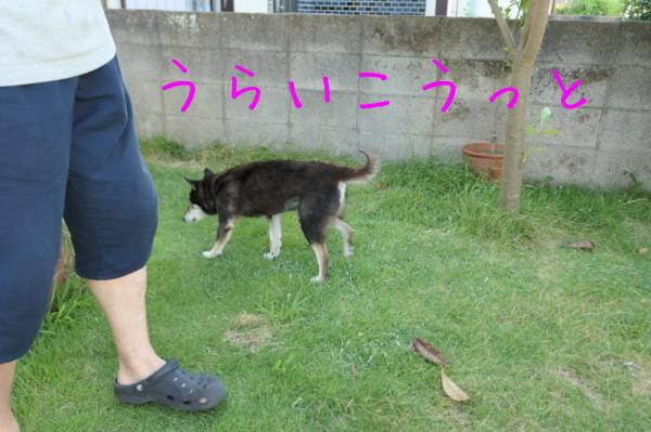 暑いのでお庭遊び_f0369014_13035960.jpg