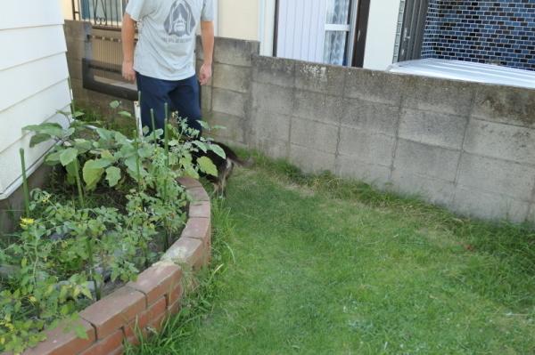暑いのでお庭遊び_f0369014_13043736.jpg