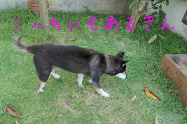 暑いのでお庭遊び_f0369014_13064485.jpg