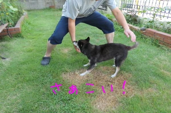 暑いのでお庭遊び_f0369014_14503768.jpg