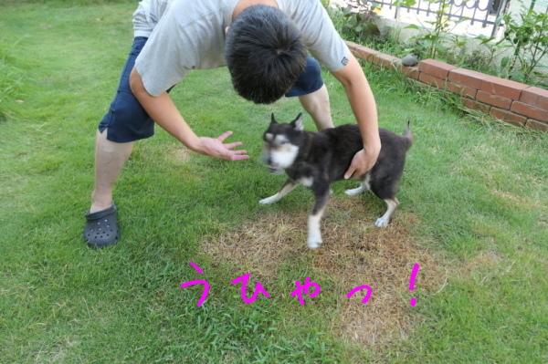 暑いのでお庭遊び_f0369014_14530768.jpg
