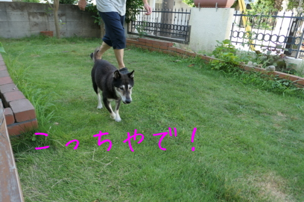 暑いのでお庭遊び_f0369014_14570594.jpg