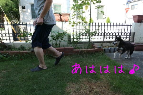 暑いのでお庭遊び_f0369014_15053383.jpg