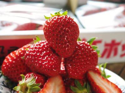 完熟紅ほっぺ イチゴは多年生植物!減農薬栽培の苗床の様子と栽培ハウスの片付け_a0254656_17174002.jpg
