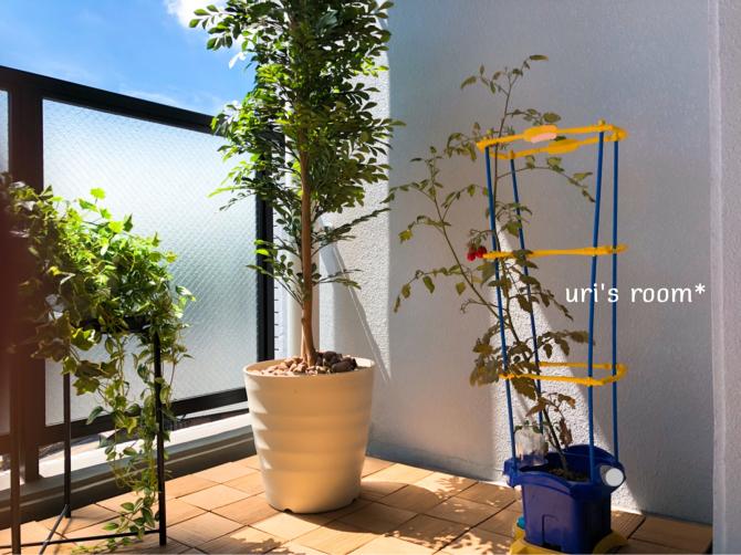リビングのグリーン化計画  その5(完結編)_a0341288_10384942.jpg